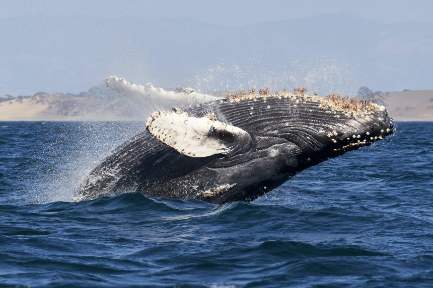 These Ethereum Indicators Show Whales Continue To Accumulate